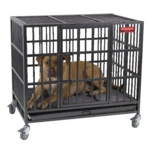 ProSelect Empire Dog Crate